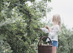 Apple harvest (V Photography and Art) Tags: apple orchard harvest woman basket fujixt2