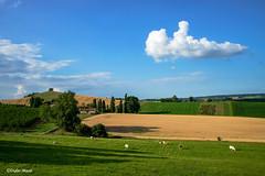 Le petit nuage dans la campagne en fin de journée (didier95) Tags: campagne coulx paysage lotetgaronne nouvelleaquitaine ciel nuage bleu vert champ vache