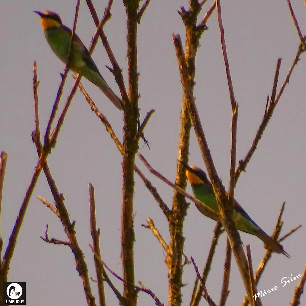 Águas Frias (Chaves) - ... aves delgadas e coloridas ...