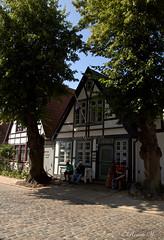 Alexandrinenstraße (Renata1109) Tags: heimatmuseum warnemünde baum haus mecklenburgvorpommern outdoor strase stadt gasse deutschland germany ostsee