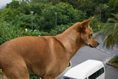 Phuket (Mohammad Nick) Tags: dog dogs puppy landscape phuket green nature