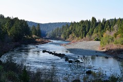 Smith River (Randy Gardner 88) Tags: jedediahsmithstatepark redwood redwoods redwoodnationalandstateparks trees smithriver delnortecounty california californiacoast