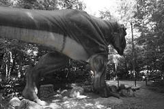 Tyrannosaurus, Dinosaur Land