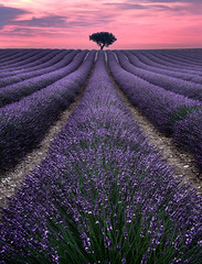 Lavender Field in France (Jimmy McIntyre - Editor HDR One Magazine) Tags: lavender france sunset raya pro exposure blending