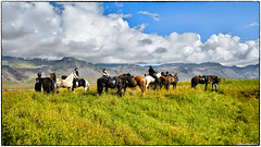 Icelandic Horses (RKop) Tags: iceland horse raphaelkopanphotography d500 1020nikkoraf‑pdx