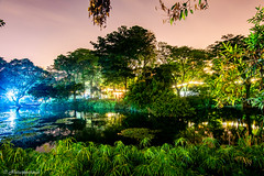 Botanical Garden, Medellín (Naturescrack) Tags: nikon d750 nature naturaleza lights luces luz ight night noche longexposure green verde lake lago medellín medellin antioquia colombia landscape landscapes reflection reflections reflejo reflejos agua water trees tree arbol arboles árbol árboles