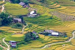 Sapa, Lao Cai, Vietnam (Bobby Tran 2012) Tags: sapa laocai vietnam landscape traditional travel tourist color colorful beautiful house rice field step