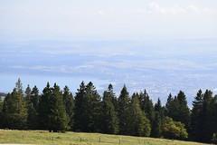 _DSC0340 (Marie-Annick Vigne. + 1'000'000. Merci. Thanks) Tags: randonnée rando suisse vaud jura stecroix bullet chasseron