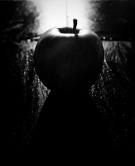 étude d'une pomme (singinghedgehog) Tags: 365the2018edition 3652018 day263365 20sep18 mono monochrome apple