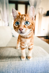 Caronte (Marco Gagliardi) Tags: portrait ritratto macro gatto cat pussy micio mici nikond7200 sigma 1020 nikkor 105 legno animale domestico animal animals pet gattino sport