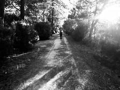 Y goedwig hud / La forêt magique (Rhisiart Hincks) Tags: beic bicycle marc'hhouarn velo baidhsagal rothar fahrrad bicylette bizikleta divrodeg diwros deurod landes euronat graianelespitau graian grayanetl'hôpital grayan médoc akitania aquitaine acwitania ocitania okzitania occitania occitània ocsitania okitania coed zuhaitzak trees crainn gwez arbres craobhan blancinegre duagwyn gwennhadu dubhagusgeal dubhagusbán blackandwhite bw zuribeltz blancetnoir blackwhite monochrome unlliw blancoynegro zwartwit sortoghvid μαύροκαιάσπρο feketeésfehér juodairbalta