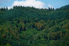 Herfstkleuren in de zomer. (limburgs_heksje) Tags: duitsland deutschland germany zwartewoud schwarzwald black forest wehra wehratal