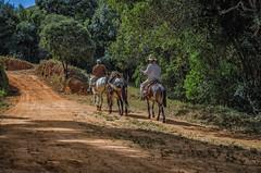 Trabalhadores rurais (mcvmjr1971) Tags: vermelho baependi parque estadual da serra do papagaio minas gerais brasil nikon d7000 mmoraes viagem area rural river border collie play fun