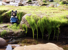 Green & hairy (pure_embers) Tags: pure embers laura uk pureembers photography teddy bear needlefelted betty sweater girl green hairy rocks rockpool nature cute felting dreams