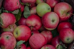 Apples (frankmh) Tags: fruit apple sofiero sofierocastlegarden helsingborg skåne sweden