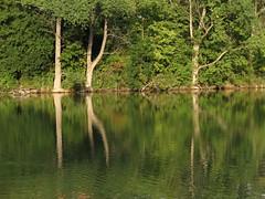 IMG_2134 (germancute) Tags: nature outdoor landscape landschaft thuringia thüringen germany germancute deutschland park tree baum teich pond spiegelung wald wasser water mirror green grün
