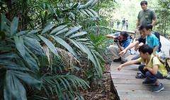 Pasir Ris mangrove boardwalk tour with the Naked Hermit Crabs, Sep 2018 (wildsingapore) Tags: pasirris people guiding mangroves marine coastal intertidal shore seashore marinelife nature wildlife underwater wildsingapore singapore kids