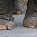 Elephant Feet (1X7A4494b)