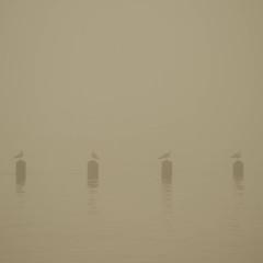 Seagulls on Watch (RichRobson) Tags: cromer misty pier seagulls norfolk cromerpier