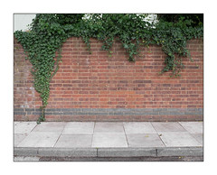 The Built Environment, East London, England. (Joseph O'Malley64) Tags: thebuiltenvironment newtopography newtopographics urban urbanlandscape wall boundary mundane humdrum boring tedious uneventful gardenwall backgarden street ivy ivyovergrown overgrowth overgrown eastlondon eastend london england uk britain british greatbritain brickwork bricksmortar cement pointing redbrick waterdamage frostdamage hygroscopicsaltsinbrickwork pavement compositekerbing tarmac road architecture architecturalphotography fujix fujix100t accuracyprecision
