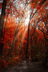 Autumn is coming (stephaneblaisphoto) Tags: autumn collection beauty nature branch change day fall forest growth land leaf leaves no people orange color outdoors plant part scenics tranquil scene tranquility tree woodland montreal canada perry island