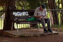Senyor i coloms.....Señor y palomas. (AviAntonio) Tags: banc home coloms parc solitud banco hombre palomas parque soledad robat robado