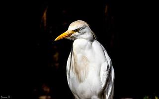 Bird - 5745