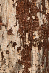 The Wonders Of Weathering (gripspix (OFF)) Tags: 20180802 wood holz paint farbe brown braun weathered verwittert peelingpaint abblätterndefarbe texture textur