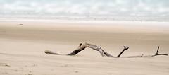 Sand drift (John (Thank you for >2 million views)) Tags: landscapephotography seascape sauntonsands driftwood beach coastline seaside ukcoast ukcoastline devon