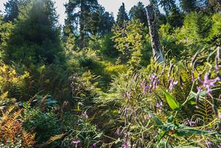 leuchtender Schwarzwald