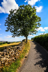 Road to Calm (gabormatesz) Tags: england nature naturephotography 1018mm canon canon80d landscape landscapes road tree clouds unitedkingdom grayrigg