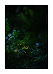 2018/8/5 - 13/18 photo by shin ikegami. - SONY ILCE‑7M2 / New Jupiter 3+ 1.5/50 L39/M (shin ikegami) Tags: sky 空 マクロ macro 井の頭公園 吉祥寺 summer 夏 sony ilce7m2 sonyilce7m2 a7ii 50mm lomography lomoartlens newjupiter3 tokyo sonycamera photo photographer 単焦点 iso800 ndfilter light shadow 自然 nature 玉ボケ bokeh depthoffield naturephotography art photography japan earth asia