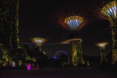 Gardens by the Bay XVIII (emptyseas) Tags: gardens by bay singapore emptyseas nikon d800 supertrees dragonfly kingfisher lakes