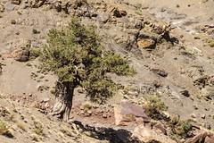 2018-4619 (storvandre) Tags: morocco marocco africa trip storvandre telouet city ruins historic history casbah ksar ounila kasbah tichka pass valley landscape