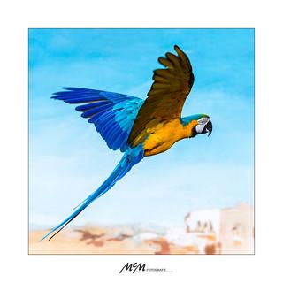 kommt ein Vogel geflogen...