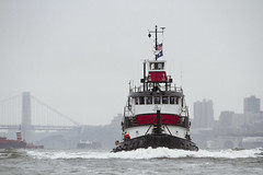 r_180909229_beat0075_a (Mitch Waxman) Tags: 2018greatnorthrivertugboatrace hudsonriver manhattan tugboat workingharborcommittee newyork