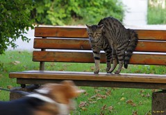 Ok, here comes trouble (alph@ wolf) Tags: cat dog bench park animal travel streetphotography outdoor alphawolf photography pentax photo pentaxart plant pentaxk1 pflanze citybreaks city