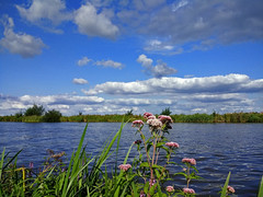 Slotergat, Sloten - The Netherlands (160917734) (Le Photiste) Tags: clay slotergatslotenthenetherlands slotenfryslân fryslânthenetherlands thenetherlands nederland flowers flora water waterscape landscape clouds cloudy cellography motorolamotog afeastformyeyes aphotographersview autofocus artisticimpressions blinkagain beautifulcapture bestpeople'schoice creativeimpuls cazadoresdeimágenes digifotopro damncoolphotographers digitalcreations django'smaster perfectview beautiful friendsforever finegold fairplay greatphotographers groupecharlie peacetookovermyheart clapclap awesomeview hairygitselite ineffable infinitexposure iqimagequality interesting inmyeyes mostrelevant livingwithmultiplesclerosisms lovelyflickr lovelyshot myfriendspictures mastersofcreativephotography magicmomentsinyourlife ngc niceasitgets nature naturesprime rainbowofnaturelevel1red planetearthnature planetearth photographers prophoto photographicworld photomix soe simplysuperb showcaseimages simplythebest thebestshot theredgroup thelooklevel1red simplybecause vividstriking wow worldofdetails yourbestoftoday mobilesnaps