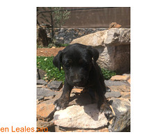 FLAUNDE en adopción (Leales.org • tu guía animable) Tags: adopta adoptar adoptanocompres noalmaltratoanimal adopción sebusca extraviado perdido perro gatos lealesorg