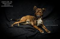 Perros medianos en adopción - IRINA (Albergue Valle Colino) Tags: adopta adoptar adoptanocompres adopción sebusca extraviado perdido perro gatos lealesorg tenerife