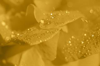 water crystals ...