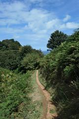 Path toward the sea - Grève le Lecq to Plémont (Monceau) Tags: path trail sea trees ferns sky clouds grèvelelecqtoplémont