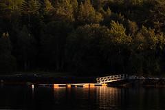 Sun Struck (Lars Ørstavik) Tags: floatingdock sea fjord water tree ålesund sunnmøre norway wharf pontoon