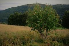 rogn (KvikneFoto) Tags: nikon1j2 landskap høst autumn fall natur norge hedmark kvikne