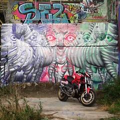 Why use horsepower when there is #zebrapower / #art by #CeePil. . #Gent #Belgium #graffiti #urbanart #graffitiart #streetartbelgium #graffitibelgium #visitgent #urbanart_daily #graffitiart_daily #streetarteverywhere #streetart_daily #ilovestreetart #igers (Ferdinand 'Ferre' Feys) Tags: instagram gent ghent gand belgium belgique belgië streetart artdelarue graffitiart graffiti graff urbanart urbanarte arteurbano ferdinandfeys ceepil
