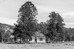Dilapidated house in the country in black and white (Merrillie) Tags: landscape old australia rural newsouthwales countryside monochrome country nsw tree dilapidated weatherboard house farmhouse outdoors farm trees blackandwhite ruins gresford abandoned