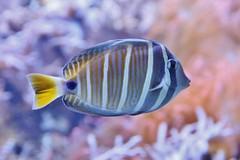 Fish (Hugo von Schreck) Tags: hugovonschreck fisch fish canoneos5dsr tamron28300mmf3563divcpzda010