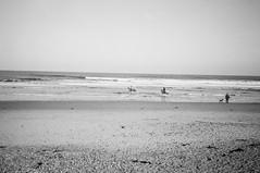 untitled (Adventures in film) Tags: fomapan caffenol caffenolch 35mm foma film fomapan100 olympusxa2 beach saltburn horses teesside