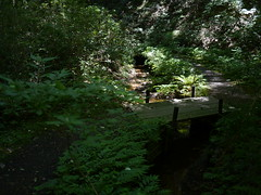 The oasis on the hot day (しまむー) Tags: panasonic lumix dmcgx1 gx1 g 20mm f17 asph 東北大学 オープンキャンパス tohoku university tour