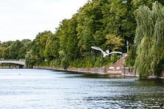 Hamburg (unicorn 81) Tags: hamburg deutschland germany schwan vogel tier alster bird